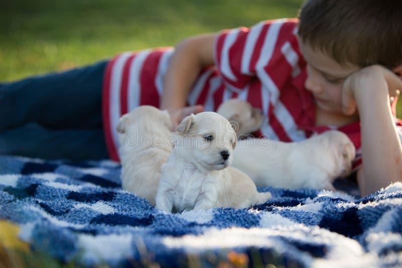 Rapaz pequeno que joga com os cachorrinhos bronzeados bonitos foto de stock royalty free