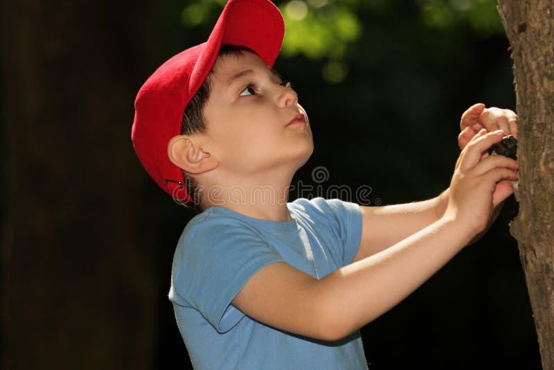 Rapaz pequeno que olha a árvore fotografia de stock royalty free