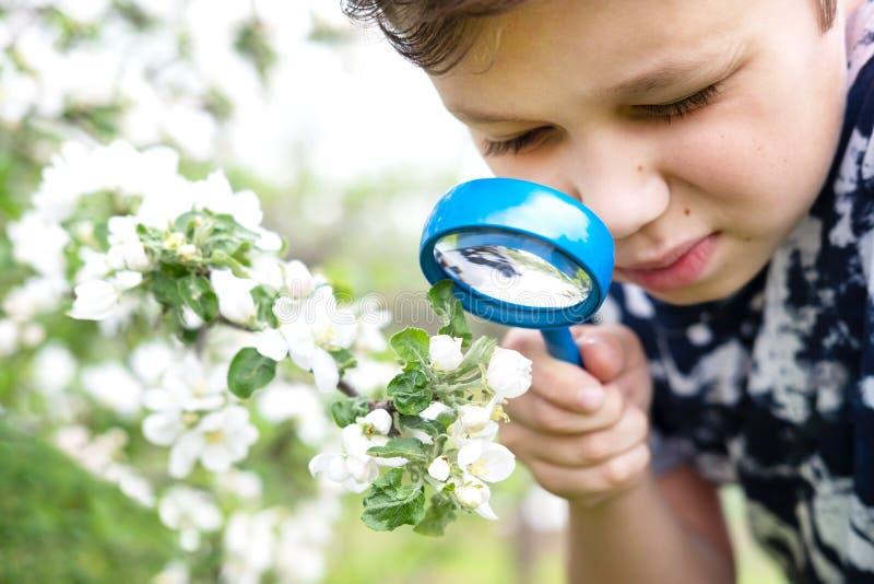 Rapaz pequeno que olha a flor através da lente de aumento foto de stock royalty free