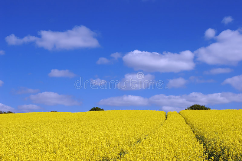 Download Field stock image. Image of field, grass, summer, spring - 2275981