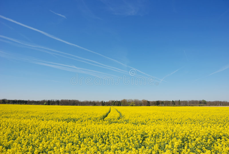 Download Field stock image. Image of outdoor, beautiful, horizon - 2530875