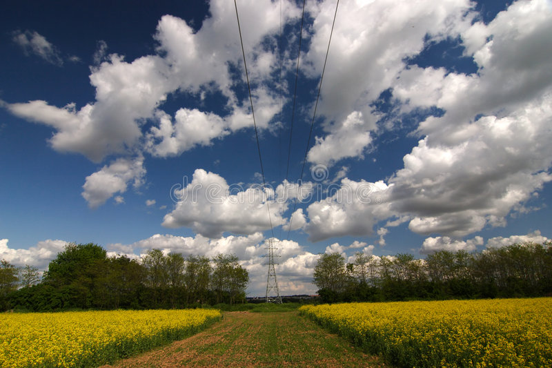 Download Field stock image. Image of electrical, blue, blooming - 5535381