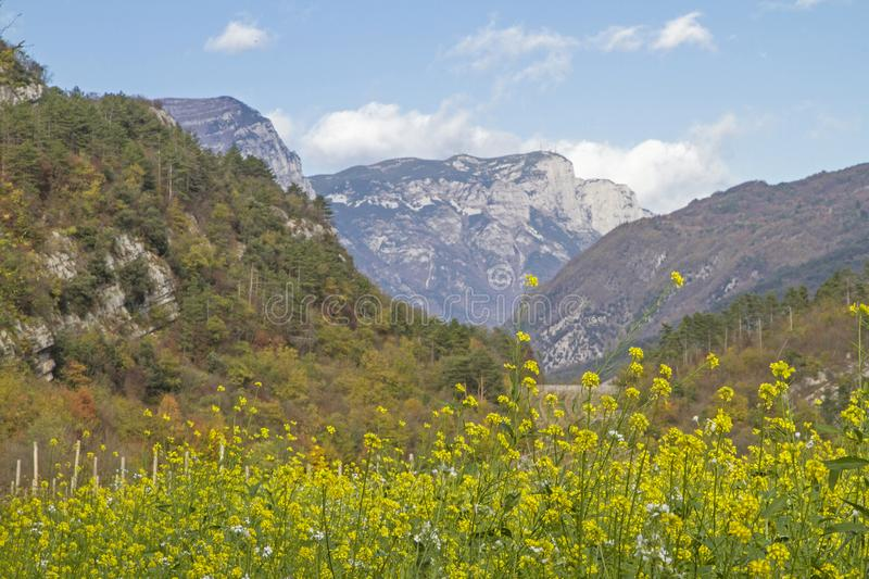 Field in Val Cavedine. Field in the Cavedine valley in front of the mighty massif of the Paganella royalty free stock photos
