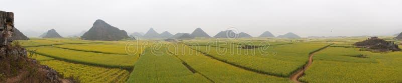 Field Panorama royalty free stock photos