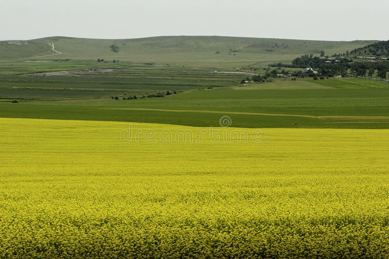 Download Field By The Black Sea Royalty Free Stock Images - Image: 29847509
