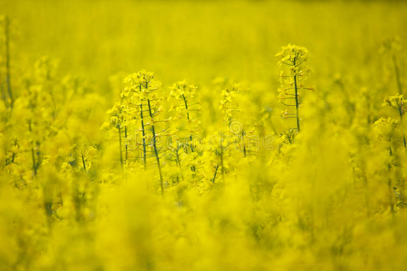 Download Field, selective focus stock image. Image of selective - 14687223