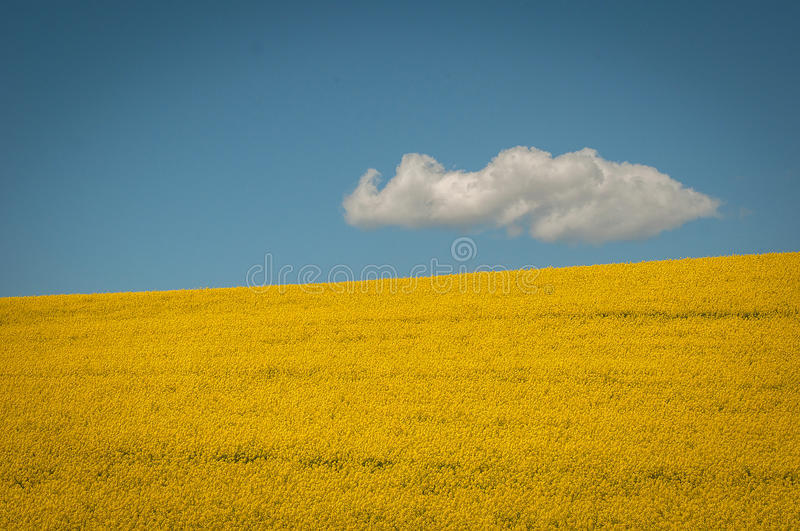 Field. On a sunny summers day stock photography
