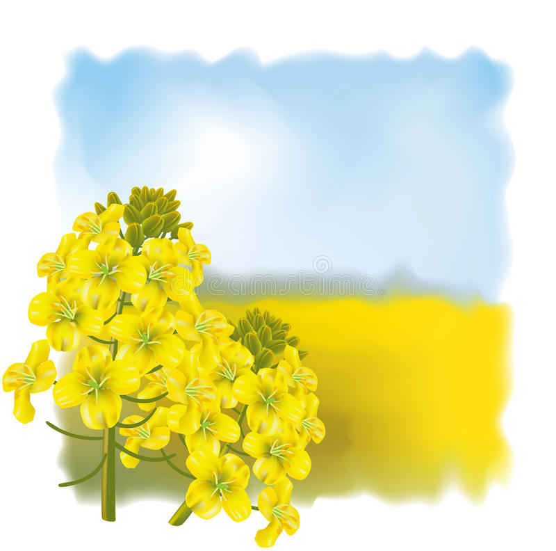 flower on a background field. stock illustration