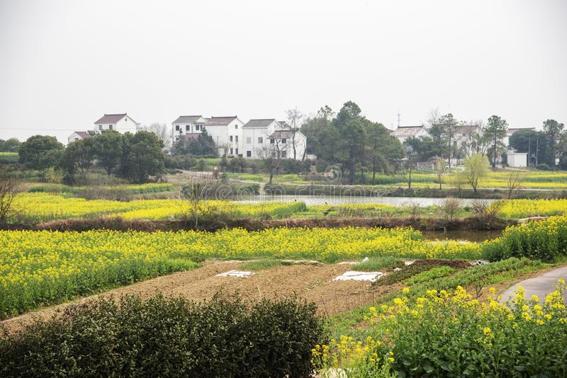 Nanjing yaxi international slow city canola pastoral scenery agricultural. Rape flowers planted by yaxi international slow city, gaochun district, nanjing stock photos