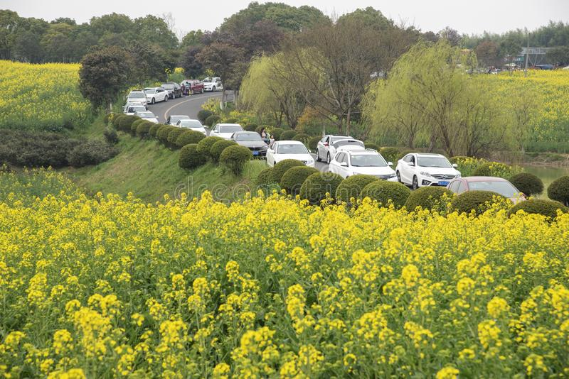 Nanjing yaxi international slow city canola pastoral scenery agricultural. Rape flowers planted by yaxi international slow city, gaochun district, nanjing stock photography