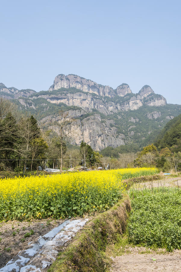 flowers and The Warehouse under The Cliff (Yaxiaku) Scenic stock photo
