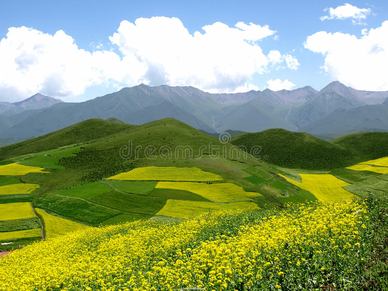 Download On the hillside stock photo. Image of beautiful, hillside - 10457984