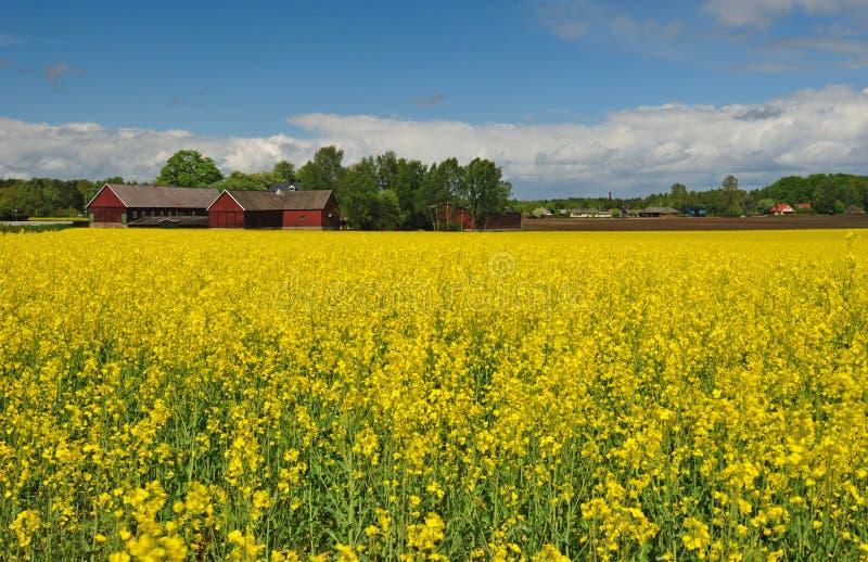 meadow landscape stock photos