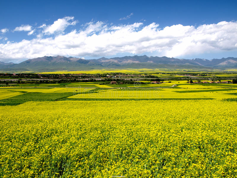 Download In the plains stock photo. Image of meadow, farmland - 10458054