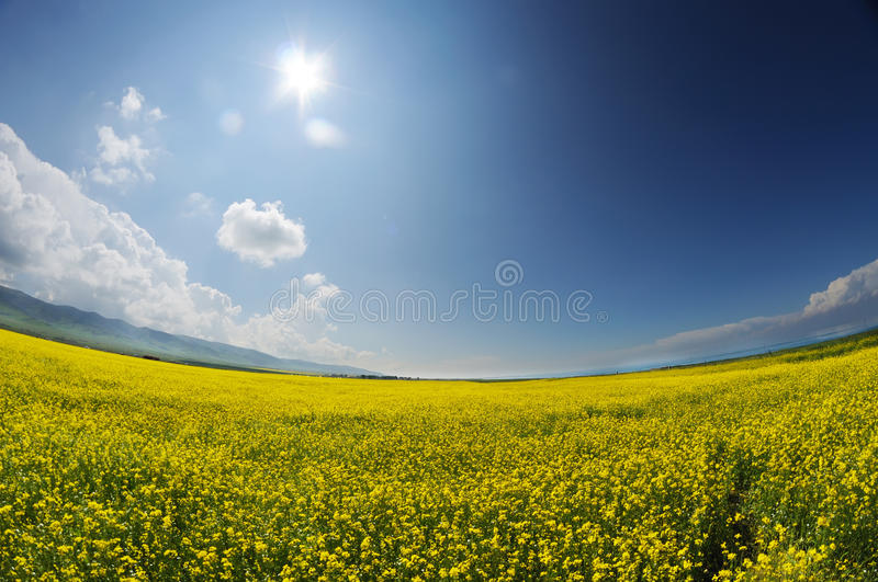seed field royalty free stock images