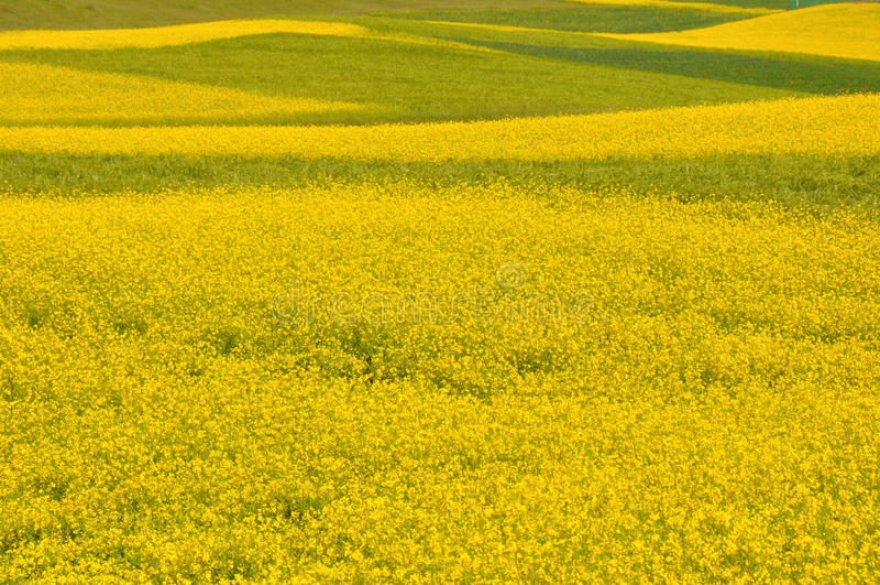 seed field stock photo