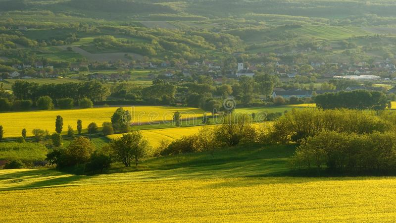 Rapeseed field in Hungary royalty free stock image
