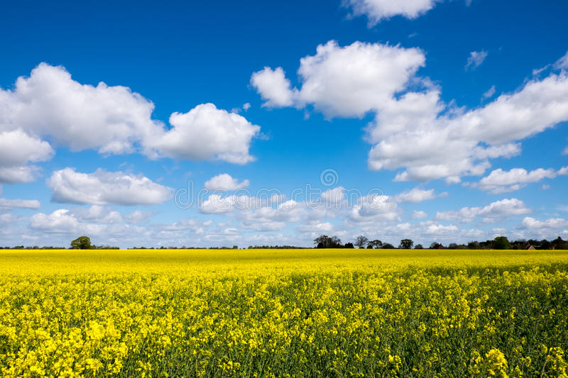 Seed Field royalty free stock image