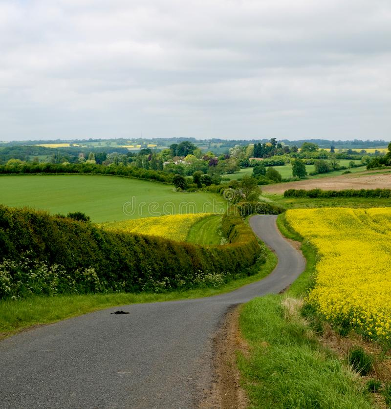 Seed Fields. In Leicestershire England country lane royalty free stock photos