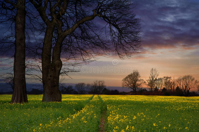 rapeseed ландшафта поля contryside стоковые фото