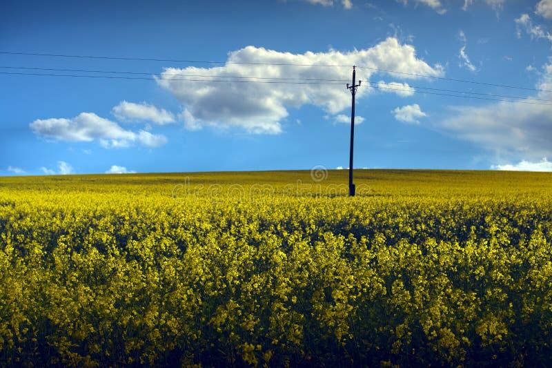rapeseed поля стоковые изображения
