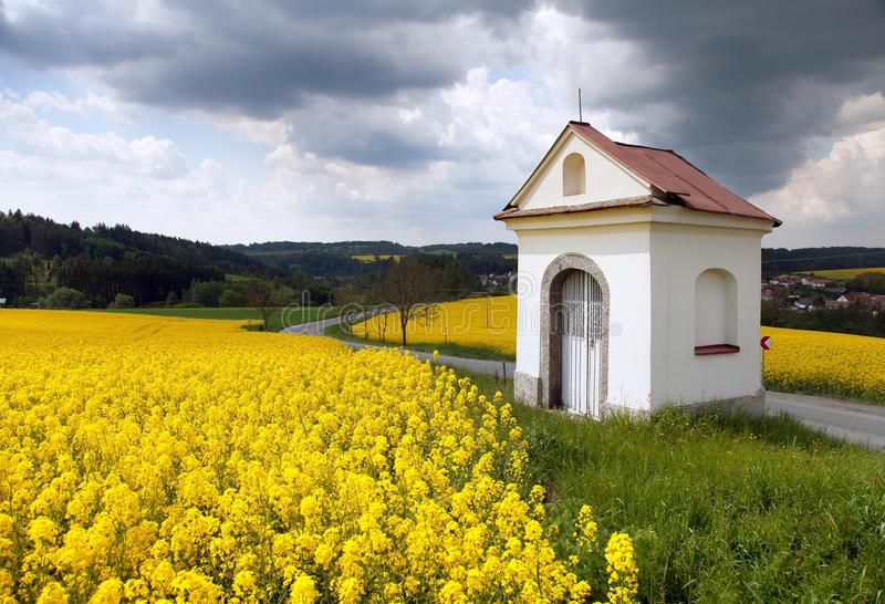 Rapeseed, canola or colza and small white chapel. Field of rapeseed, canola or colza, in latin Brassica Napus and small white chapel with beautiful clouds, seed stock images