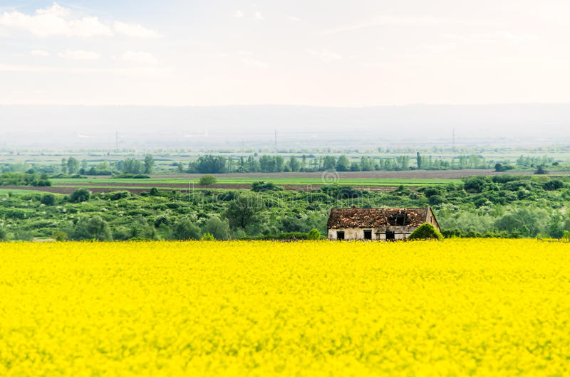 Rapeseed landscape with old rustic house royalty free stock images