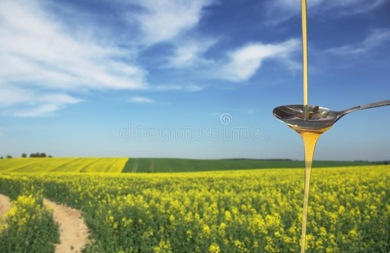 Rapeseed oil royalty free stock photos