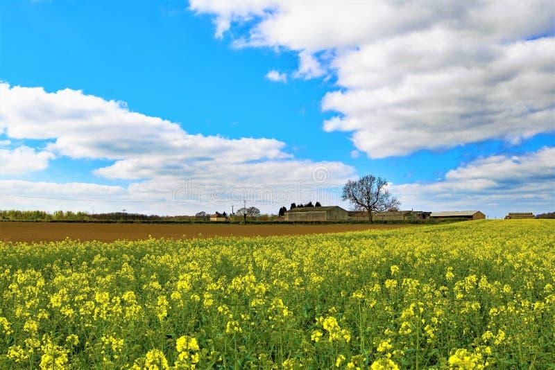 Rapeseed pola, Sprotbrough ziemia uprawna, Doncaster zdjęcia royalty free