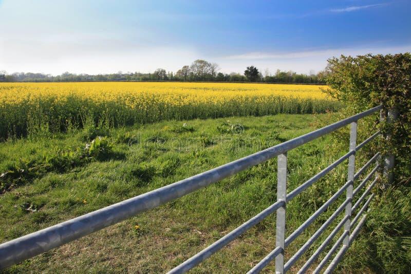 Rapeseed pole i gospodarstwo rolne brama zdjęcia royalty free