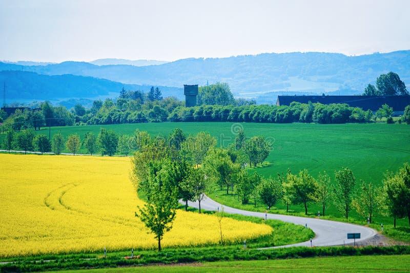 Rapeseed rośliny pole Południowy Moravia, republika czech obraz stock