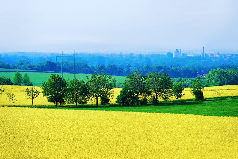 Rapeseed rośliny pole w Południowym Moravia, republika czech zdjęcia royalty free