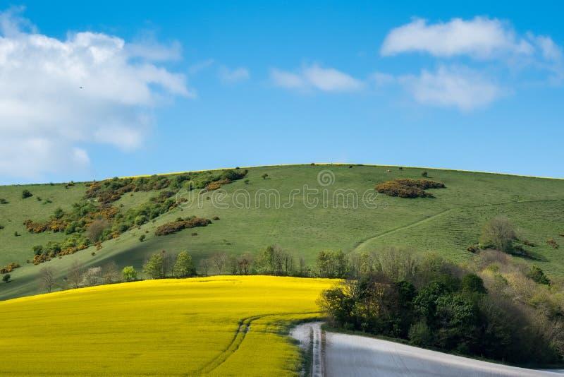 Rapeseed w Tocznej Sussex wsi zdjęcia royalty free