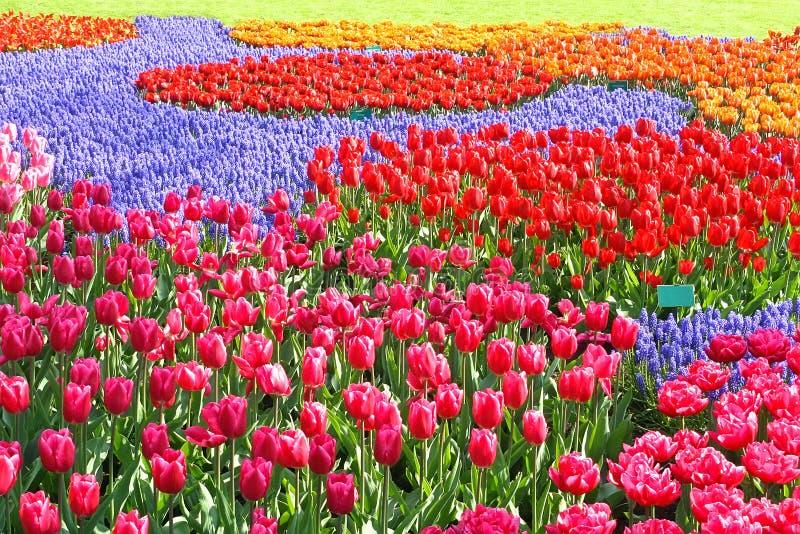 Rapiéçage coloré de jardin de tulipes photographie stock