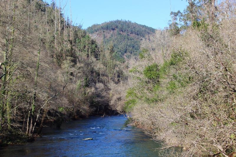 Rapid flow of the Eume River through the Oak forest. Galicia, Spain. stock photography