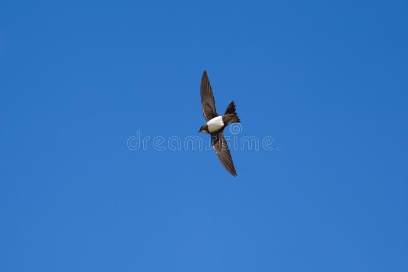 Rapide alpin en ciel bleu images libres de droits