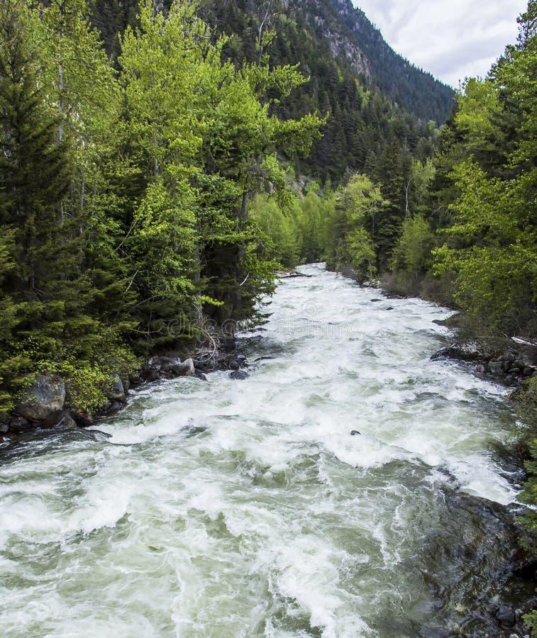 Rapids da água branca fotos de stock royalty free