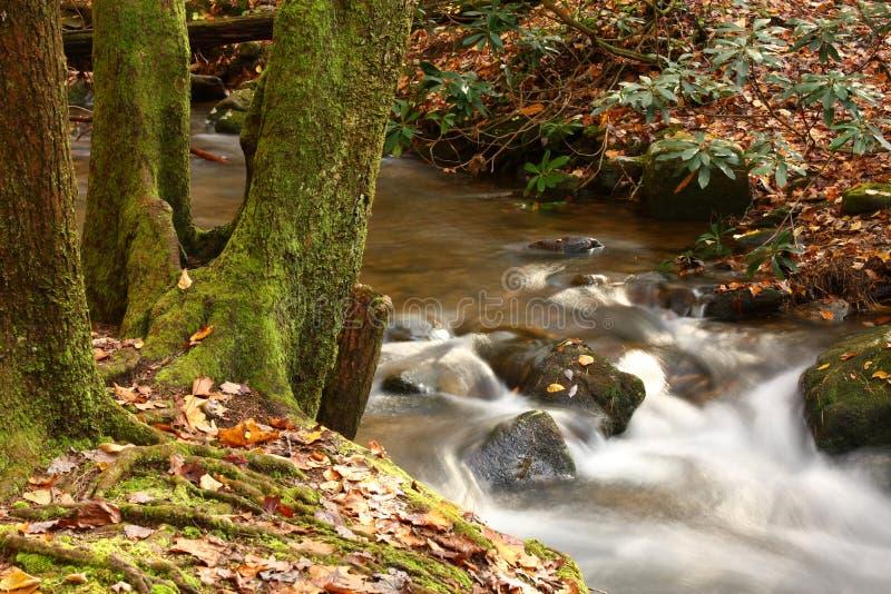 Rapids del flusso della montagna nella caduta fotografia stock