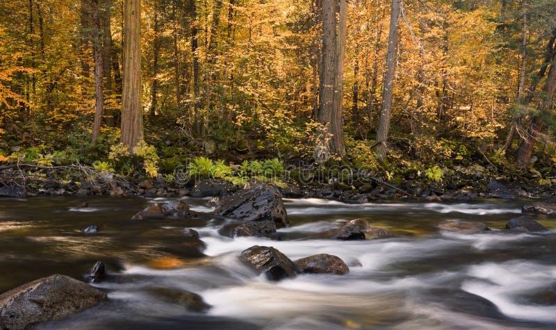 Rapids del río de Merced en caída fotografía de archivo