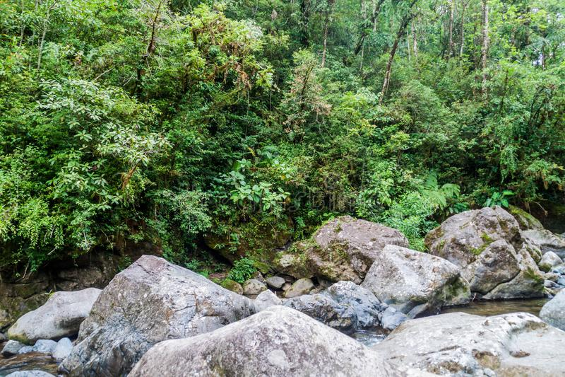 Rapids of Rio Hornito river and a jungle in Pana. Ma royalty free stock photography