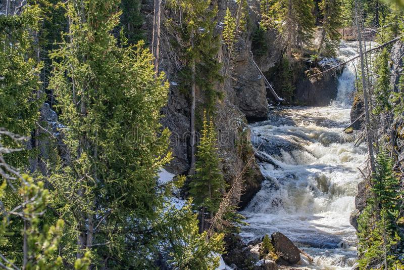 Rapids on river in yellowstone. Rapids rushing on a stream river in yellowstone national park during the spring or summer royalty free stock images