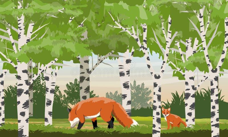 Raposa vermelha em um bosque do vidoeiro Animais selvagens da floresta ilustração royalty free