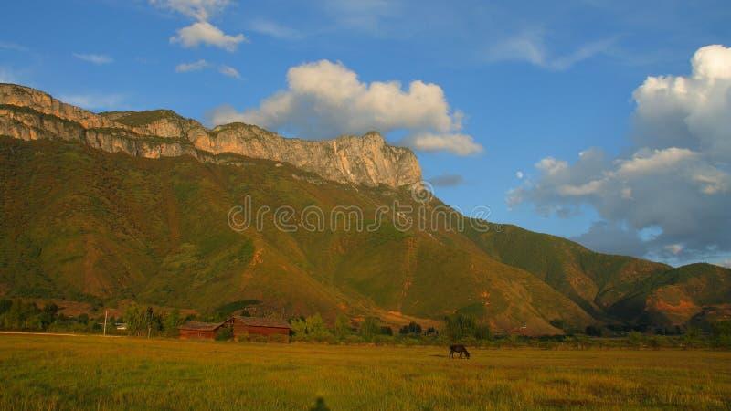Rappe, die Gras auf der Weide, mit dem schönen heiligen Berg Gemu im Hintergrund isst stockfotografie