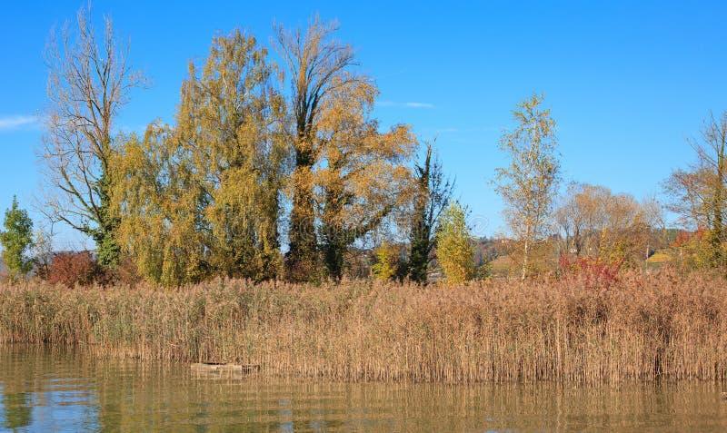 Rapperswil, See Obersee, Herbst lizenzfreie stockfotografie