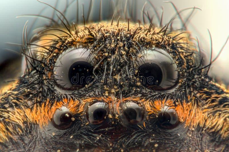 Rapport optique extrême - Wolf Spider, yeux images stock