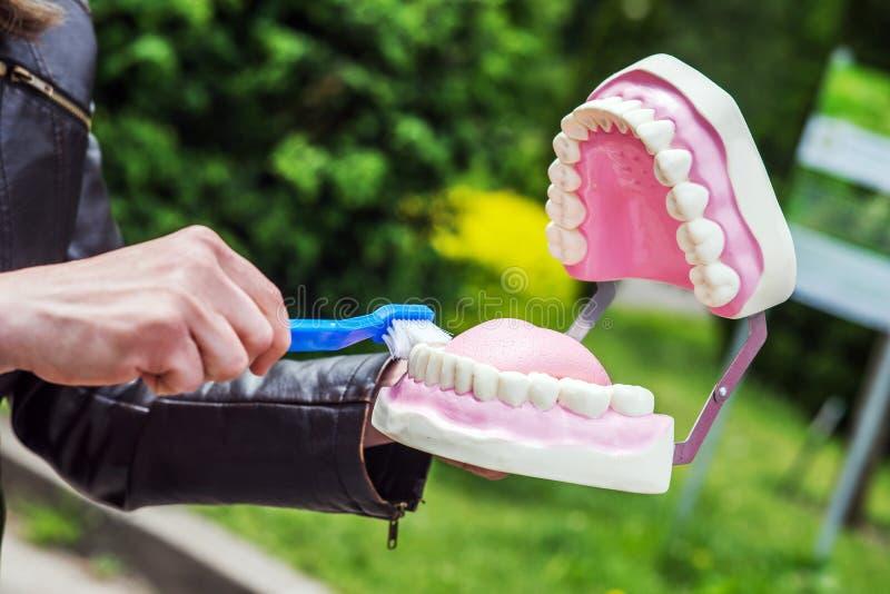Rappresentazione della donna come pulire correttamente i denti con lo spazzolino da denti e radrizzare fotografie stock