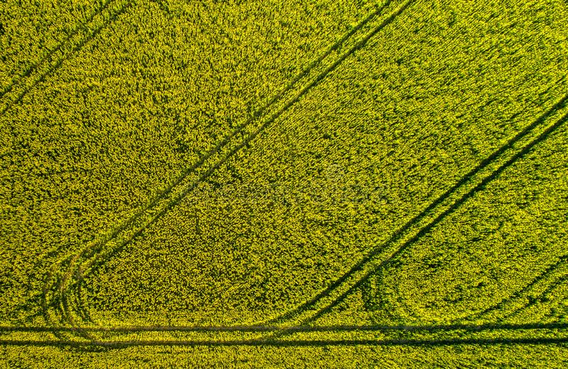 Raps field top view royalty free stock photos