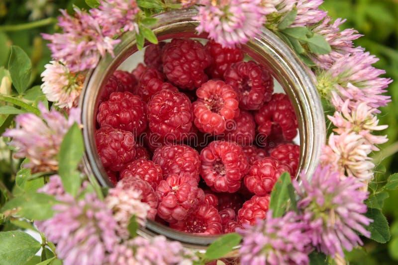 Rapsberry i koniczyna zdjęcie stock