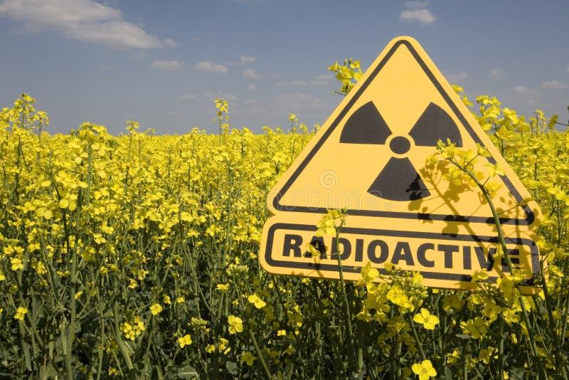 Rapsfeld mit dem Zeichen radioaktiv stockfotos