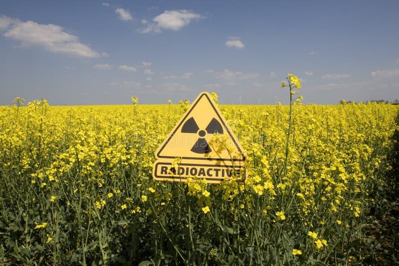 Rapsfeld mit dem Zeichen radioaktiv stockbilder